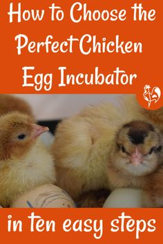 How to choose the best incubator for you. Raising Meat Chickens, Raising Ducks, Raising Backyard Chickens, Backyard Farming, Incubating Chicken Eggs, Hatching Chickens, Egg Incubator, Perfect Chicken, Important Facts