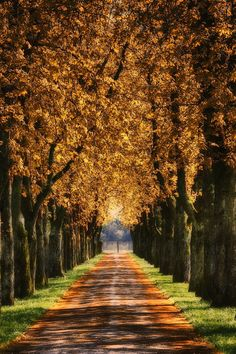 Autumn trees by Albin Bezjak