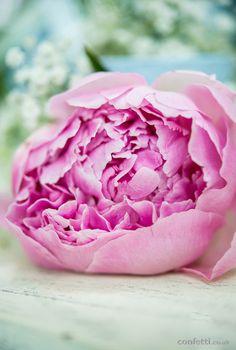 Flower #pink #DIY #Article