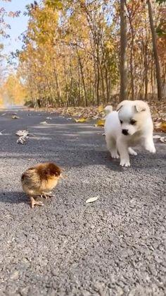 Cute Kawaii Animals, Cute Wild Animals, Baby Animals Pictures, Cute Little Animals, Cute Funny Animals, Animals Beautiful, Animals And Pets, Cute Baby Dogs, Cute Little Puppies