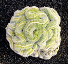 thinking cactus by gig in gir, via Flickr