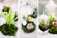 Moss and mini terrariums as centerpieces