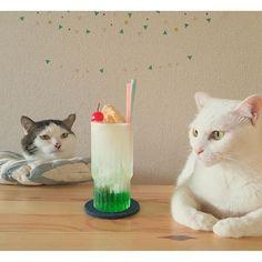 クリームソーダ #八おこめ #ねこ部 #cat #ねこ #八おこめ食べ物 #クリームソーダ