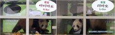 La actualidad de la semana en las Coreas tiene osos panda, sanciones de la ONU contra Corea del Norte, móviles sumergibles y muchas otras noticias de interés.