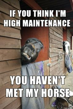 High-Maintenance Horses!