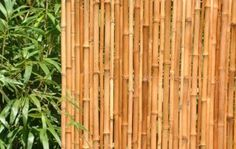 Bamboo is taking over my whole back yard. This is a great way to make use of it while getting rid of it.