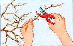 glycine tailler année - Qu'elle soit palissée contre un mur ou une pergola, la glycine a besoin d'être conduite et taillée chaque année. A défaut, la plante aura tendance à pousser tout en feuilles au détriment de ses longues grappes parfumées.