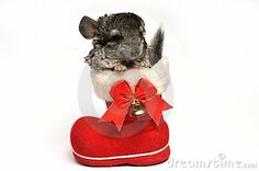 Chinchillas have very sensitive digestive systems and too much watery food can cause problems.  URL: http://chinchilla.co/  Fb fan page: https://www.facebook.com/chinchilla.co
