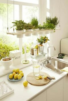 Having plants in your home will improve the air quality of your home and make it look more inviting. [Indoor Plants Potted Plants Indoor Herb Garden Small House Plants Comfortable Home Decor Improving House Comfort Plants In Kitchen Brighten Up Your Home] Kitchen Remodel, Kitchen Decor, Kitchen Plants, Interior Garden, Kitchen, Small House Plants, Kitchen Herbs, Sweet Home, Home Kitchens