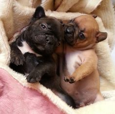 Distractify   The 21 Most French Bulldog Things To Happen In The History Of Frenchies