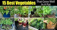 36 Best Beautiful But Deadly Plants Images Deadly Plants Plants