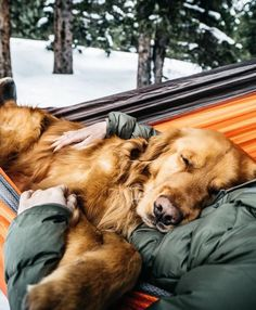Aspen the Mountain Pup Trip – Fubiz Media Puppies And Kitties, Cute Puppies, Cute Dogs, Doggies, Retriever Puppy, Dogs Golden Retriever, Golden Retrievers, Baby Animals, Cute Animals