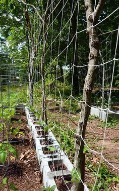 Growing vertically is a great way to make the most of a small garden space. Learn to build an inexpensive garden trellis with these DIY trellis ideas. Tomato Trellis, Diy Trellis, Trellis Ideas, Small Garden Trellis, Trellis Design, Small Space Gardening, Gardening Tips, Organic Gardening, Farm Gardens