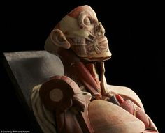 Photograph of an old anatomical model.   This particular model was about to be thrown away...
