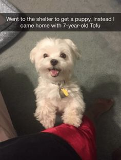 Went to the shelter to get a puppy, instead I came home with 7-year-old Tofu