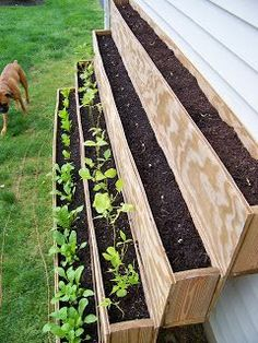 Small-Space Gardening/Urban Gardening- this would be a cool project for your place. Fresh spinach, lettuce and other greens just out the door! #urbangardening