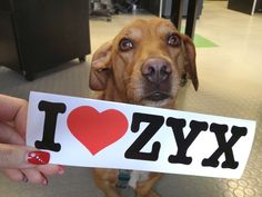 Wir lieben Paul und Paul liebt ZYX