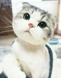 Very interesting post: TOP 32 Funny Cats and Kittens Pictures.сom lot of interesting things on Funny Animals, Funny Cat. Cute Cats And Kittens, I Love Cats, Crazy Cats, Kittens Cutest, Baby Animals, Funny Animals, Cute Animals, Funny Cats, Pretty Cats