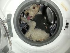 Alfie hates thunderstorms. Could not get him to come out.I've heard of taking your dog out for a spin ......