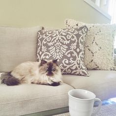 "Christina | Oh So Glam on Instagram: ""on my third cup of coffee  having a relaxing morning with this little lady @mischathehimalayan ☕️ #caturday #coffee #glamathome #mischathehimalayan 