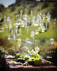 hanging plants make for a stunning display at this outdoor wedding reception
