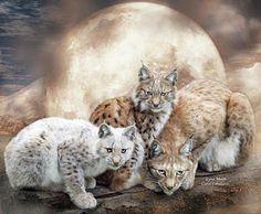 Mixed Media - Lynx Moon by Carol Cavalaris