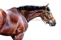Joanne Kitson Fine Art - Equine Gallery