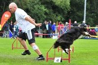 Tips on How to Complete an Agility Course Successfully - OneMind Dogs