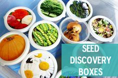 Seed Discovery Boxes for investigating plants with toddlers (or even older kids!) Have you ever showed your children the seeds of plants they love? http://secondstorywindow.typepad.com/home/2012/04/seed-fun.html