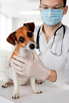 Study Highlights Concerns Over Need To Test Drugs On Dogs