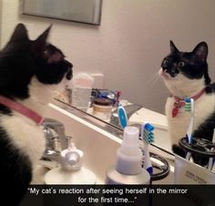 My cat's reaction on seeing herself in the mirror for the first time.