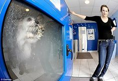 Dog Washer :Scientists have made life easier for pet owners with their automatic washing machine. People can save time by putting their pooch in the machine and then 33 minutes later, out comes a clean, fresh-smelling dog. The process includes a shampoo, rinse and blow dry