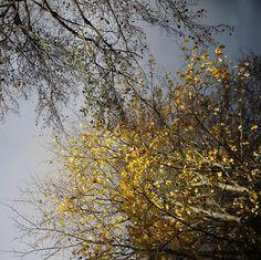 #mystoryhelsinki #canonnordic #autumnleaves #töölö #töölönlahti #myhelsinki #ig_helsinki #helsinkiofficial #visithelsinki #ourhelsinki #visitfinland #ig_finland #explorefinland #discoverfinland #ourfinland #thisisfinland #finland_photolovers #thebestoffinland #igersfinland #igscandinavia #nordicphotos  #planetwanderlust #yleluonto #uusiluontokuva #suomenluonto Wanderlust, Helsinki, Finland, Travel, Instagram, Viajes, Trips, Traveling, Tourism