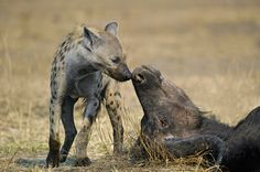 Kiss of death by Marc MOL