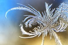 This close-up has a high level of detail and the beauty of the subject can be seen through it. The background is completely blurred and perhaps makes the subject look more detailed.I really like this photo. Snowflake Photos, Snowflakes, Ice Art, Ice Crystals, Artsy Photos, I Love Winter, Snow And Ice, Winter Photos, Winter Beauty