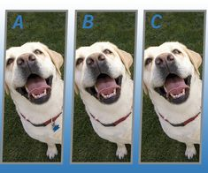 Spot The Different Dog Quiz from correct answers. Complete your quiz offer with accuracy and get credited. Watch Live Cricket, Coin Master Hack, Quiz Me, Different Dogs, Mobile Legends, Dalmatian, Fleas, Cute Dogs, Your Dog