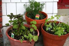 herb container garden & maybe a tomato plant- since we won't have a big garden this year