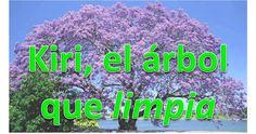 Mucha contaminación, maltrato de tierras, y el... Kiri, el árbol que limpia