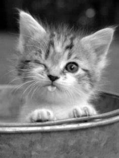 Kitten...!