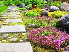 piha,istutus,kivetys,käytävä,kulkuväylä,puutarha,asetelma,kivet,laatat,kaunis,värikäs,luonto