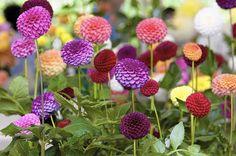 midwestern flower garden - Google Search