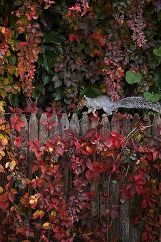 Squirrel in a beautiful autumn garden Autumn Day, Autumn Leaves, Dark Autumn, Autumn Scenes, All Nature, Autumn Nature, Seasons Of The Year, Arte Floral, Fall Season