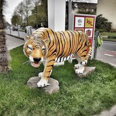 Put the tiger in your petrol tank. #Tiger #GasStation...
