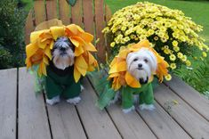 Sunflower Dog Costumes