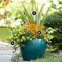 Simple Sunny Container Garden  Add pizzazz to a muted 16-inch-wide container with this colorful combination of zinnias, calibrachoas, and New Zealand flax.  A: Cabaret Yellow Calibrachoa -- 2  B: Zahara Fire Zinnia -- 2  C: New Zealand flax (Phormium cookianum 'Cream Delight') -- 1