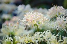 by Nobuhiro Suhara Via Flickr - Google'da Ara