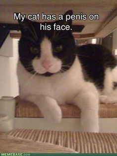 .lmao! poor kitty