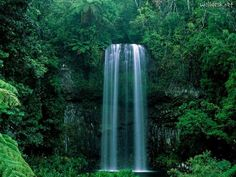 Milla Milla Falls near Cairns Australia Beautiful Places To Visit, Beautiful World, Places To See, Beautiful Things, Cairns Queensland, Queensland Australia, Waterfall Wallpaper, Tens Place, Its A Wonderful Life