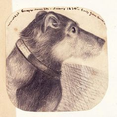 A sketch of Grasper, one of the Brontë family's  beloved dogs. (courtesy of Brontë Parsonage Museum)