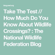 Take The Test // How Much Do You Know About Wildlife Crossings? : The National Wildlife Federation Blog